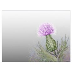 watercolor thistle Poster