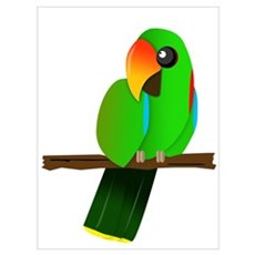 Eclectus Male Poster