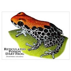 Reticulated Poison Dart Frog Poster