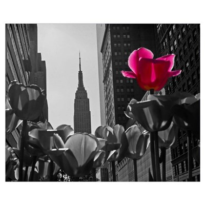 NY Tulips Canvas Art