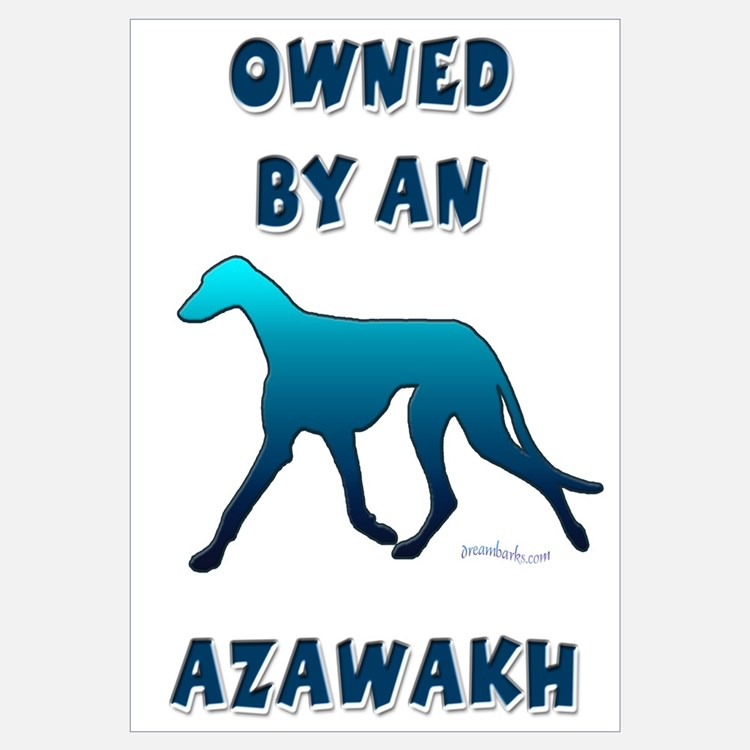 Owned by an Azawakh