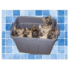 """Cairn Terrier """"Tub 'O Pups Poster"""