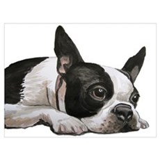 Pondering Boston Terrier Poster