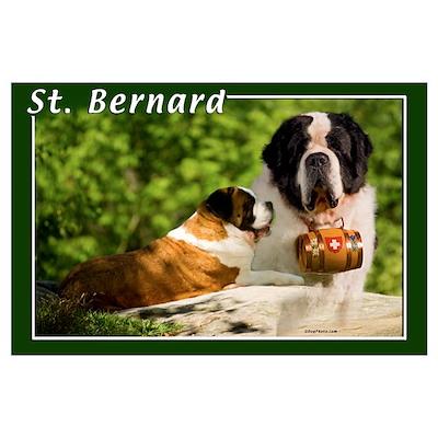 St Bernard-1 Poster
