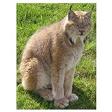 Big cat photos Wrapped Canvas Art
