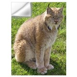 Big cat photos Wall Decals