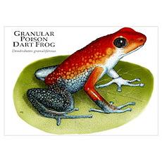 Granular Poison Dart Frog Poster