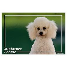 Miniature Poodle-9 Poster
