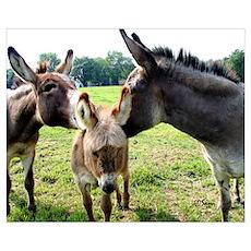 Miniature Donkey Family Poster