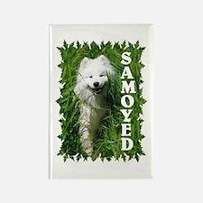 Samoyed In Grass Rectangle Magnet