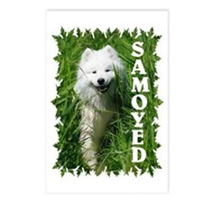 Samoyed In Grass Postcards (Package of 8)
