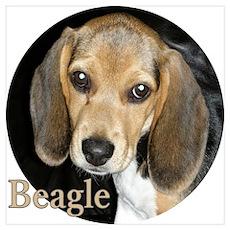 Close Up Beagle Puppy Wall Art Poster