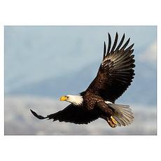 Eagle Flight Poster