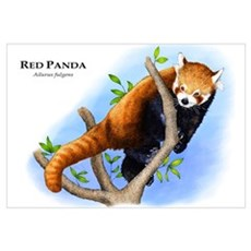 Red Panda Canvas Art