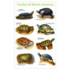 Turtles of North America Framed Print