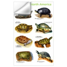 Turtles of North America Wall Decal