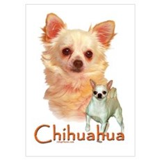 Chihuahua-1 Poster
