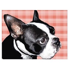 Red Plaid Boston Terrier Poster