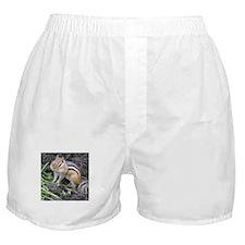 Cheeky Chipmunk Boxer Shorts