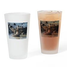 Sea Lion 1 Drinking Glass