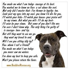 Only Thing, Pit Bull Framed Print