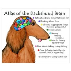Dachshund Brain (long) Framed Print