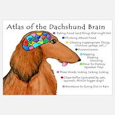 Dachshund Brain (long)