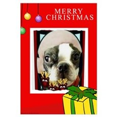 MERRY CHRISTMAS BOSTON TERRIER LOOK P Canvas Art
