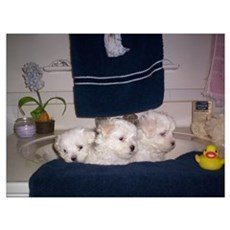 Puppy Bath Time Poster