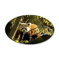 Red Panda 1 22x14 Oval Wall Peel