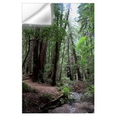 Muir Woods, California Wall Decal