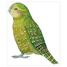 Kakapo Female Poster