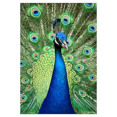 Funny Peacock Wall Art