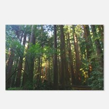 SF Bay Area Redwood Forests Postcards (Pack of 8)