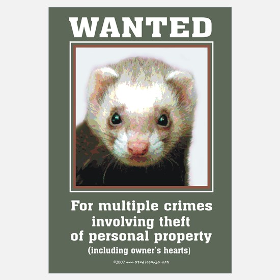 Ferret Wanted