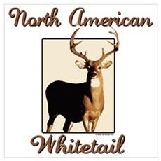 American Whitetail Poster