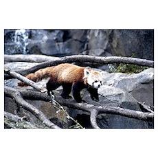 Red Panda 3 Poster