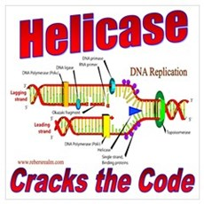 Helicase Cracks the Code Canvas Art