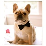 French bulldog Wrapped Canvas Art