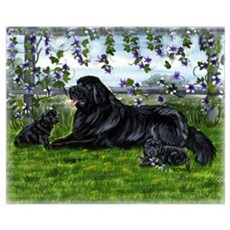 Newfoundland Dog and Pups Poster