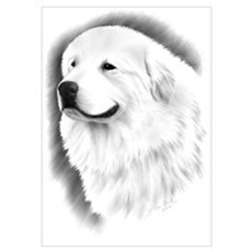 Great Pyrenees Charcoal Poster