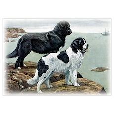 Newfoundland Poster
