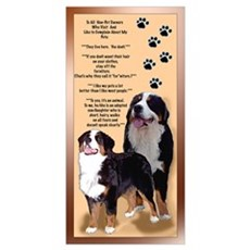 Bernese Mtn Dog s Framed Print