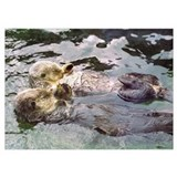 Sea otters holding hands Posters