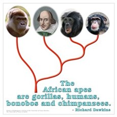 African Apes (Shksp) Poster