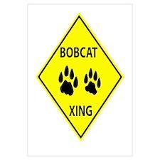 Bobcat Crossing