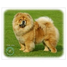 Chow Chow 9B008D-17 Canvas Art
