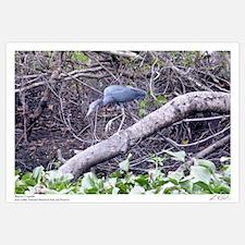 Hunting Waterbird I
