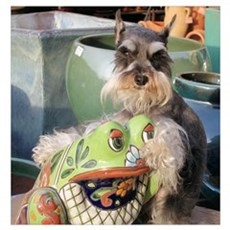 Schnauzer and the Toad Poster