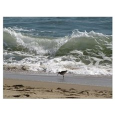 Kill Devil Hills Shore Bird Poster